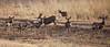 Mule deer see us