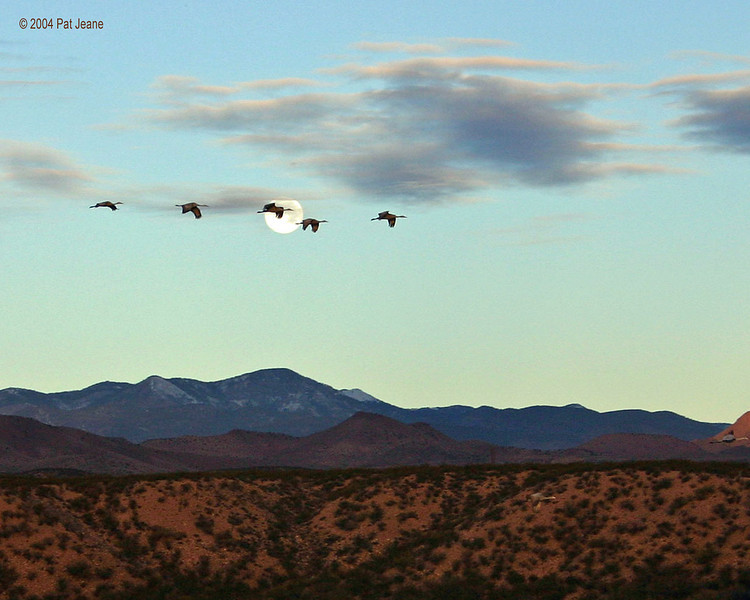 Action above the Crane Pools. 11/27/2004.