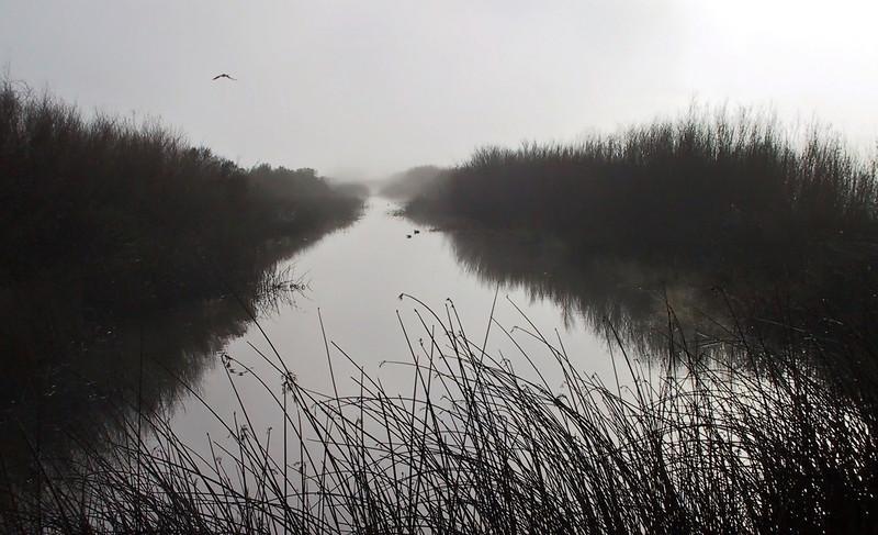 Early morning fog.
