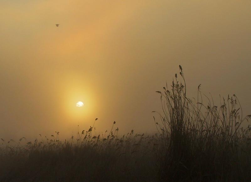 Sun shining through fog.