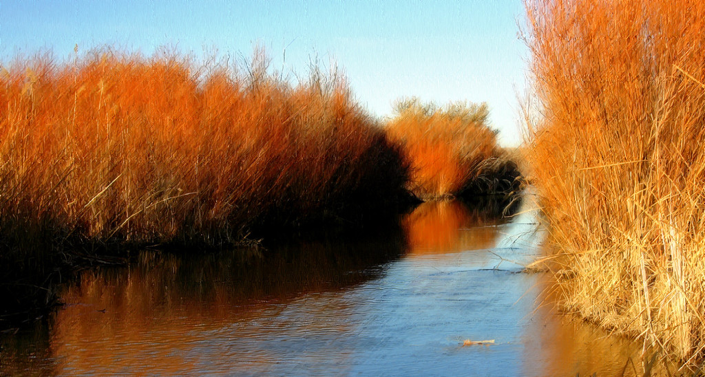 Impressionist portrait of water, sky, willows