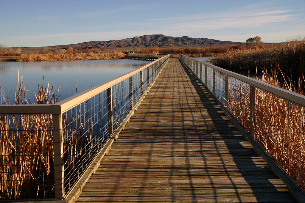 Bosque boardwalk #2