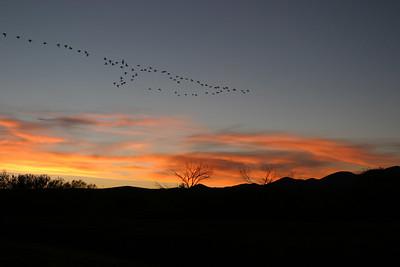 Sunset Flight, 2005