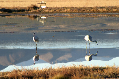Sandhill Reflections, 2005