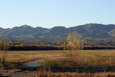 View Across the Bosque, 2005