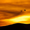 Sandhill Cranes Fly into Sunset