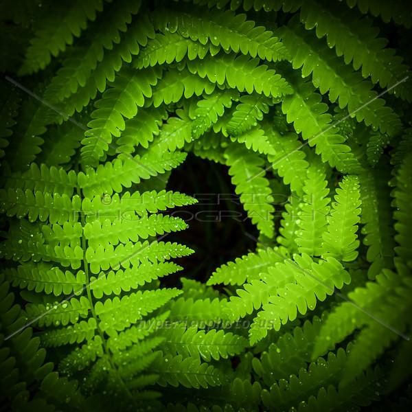 Emerald Vortex