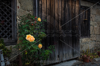 Roses against historic forge building.