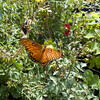 Botanic Garden, UCR