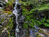 Ferns, Mosses, & Waterfall