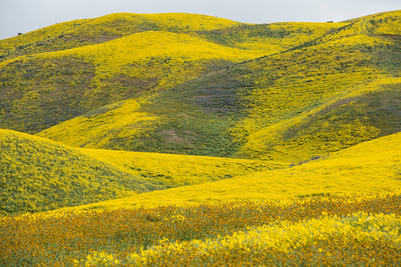 Spring bloom at the Carrizo Plain