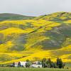 California bllom on the hills