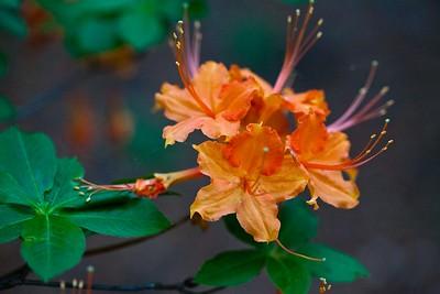 BotanicalGardens2014