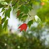 fall leaf_0553
