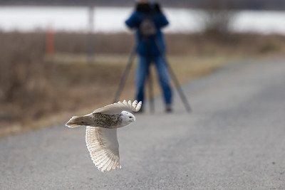 Photographers are required to stay on the dyke road.  The birds can go wherever they please.