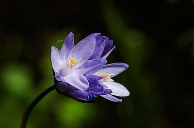 Bouverie Preserve spring wildflowers