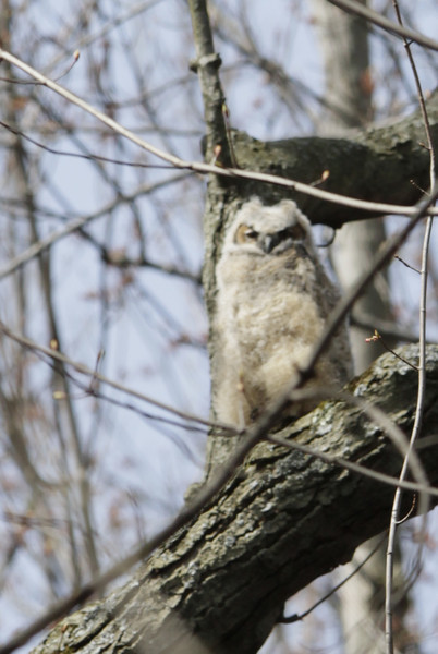 04 22 13_owl baby_4676_edited-1