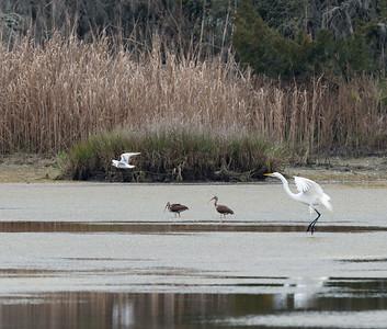Birds at Upper Sanctuary Pond