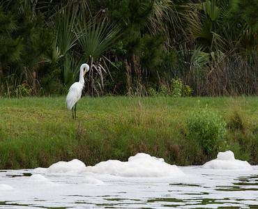 Palms, Bird, and white snow??? Nope, just white foam.