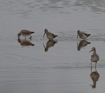 Yeah, a shore bird I can name.  Greater Yellow legs