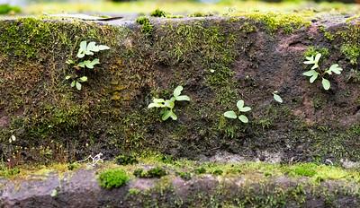 Life on a brick