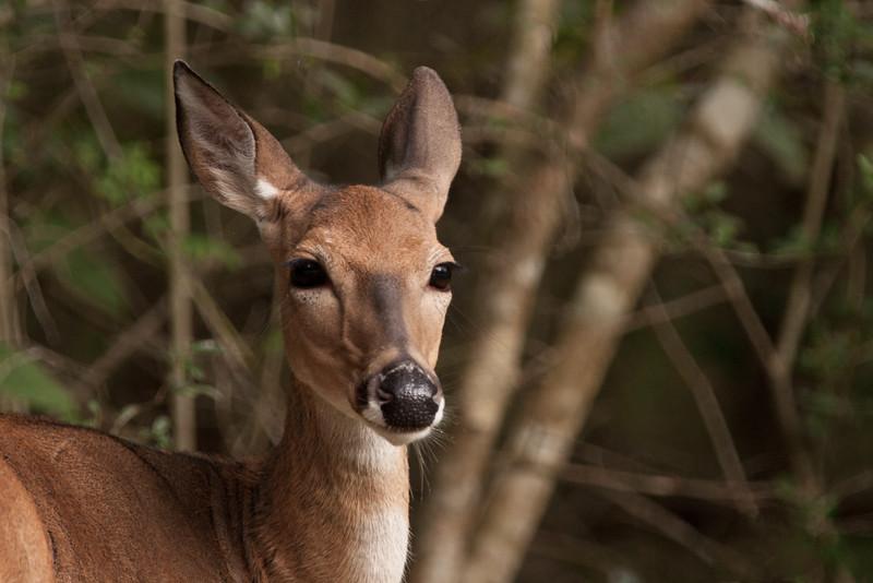 DeerPortrait15x10x300sRGB,KE8V7000