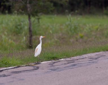 Brazos Bend State Park 9-14-15