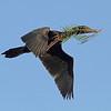 Cormarant fly twig crop smug_5086