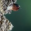 swallows -161