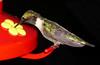 Hummingbird-Edited2