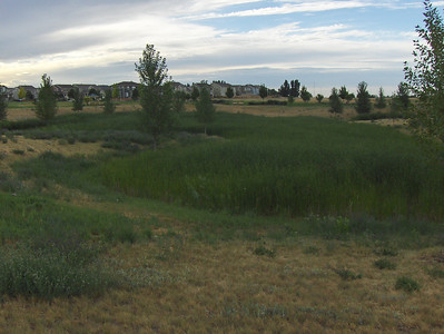 Marsh area near our home in Brighton, CO - I have seen a beautiful red fox here, as well as, many species of birds