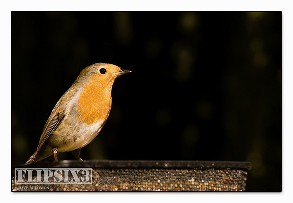 ...and another Robin