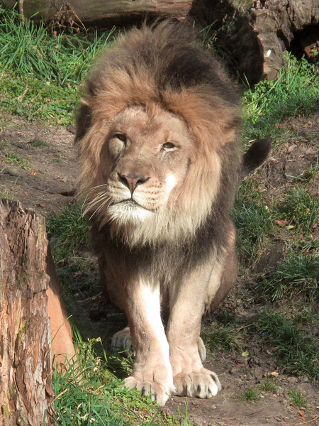 Brookfield Zoo November 2011