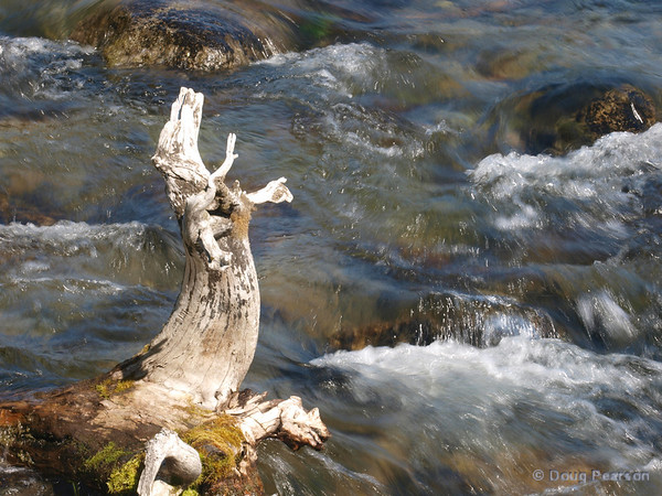 A stump in the river.  Taken near Brooks Camp and Lodge in the Katmai National Park.