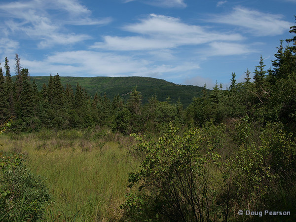 A meadow near Brooks Camp and Lodge in the Katmai National Park.