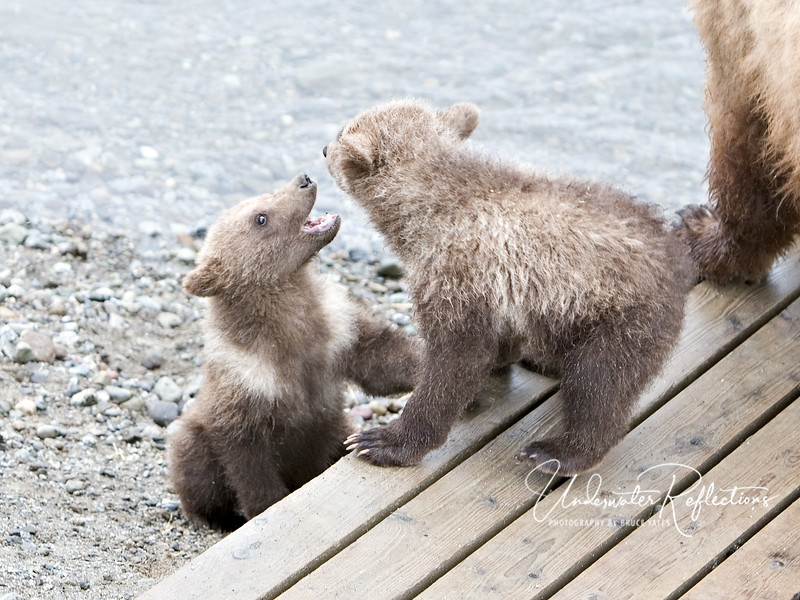For the cubs, it's always play time!