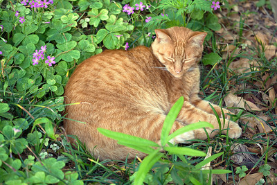 Our cat, Catapult, has built a nest in the greenery.