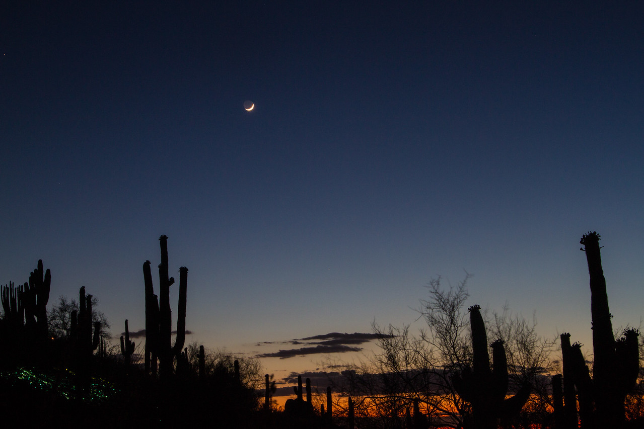 IMAGE: https://photos.smugmug.com/Nature/Bruce-Munro-Sonoran-Light-2016/i-CZ4RX48/0/X2/IMG_9290-X2.jpg