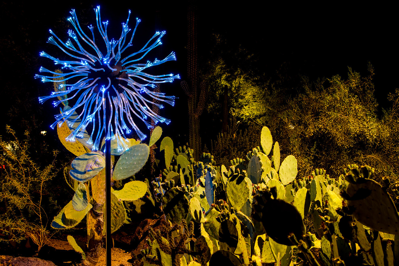 IMAGE: https://photos.smugmug.com/Nature/Bruce-Munro-Sonoran-Light-2016/i-HxPqsxr/0/X2/IMG_9328-X2.jpg