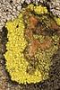 lichen0005