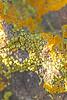 lichen0129