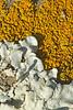 lichen8952