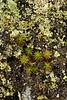 lichen0196