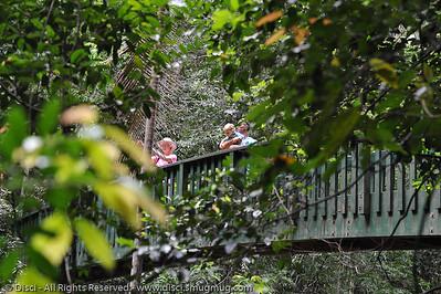 Serenity Bridge - Buderim Forest Park, Monday 8 March 2010 - handheld photos.