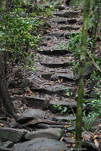 Buderim Forest Park, Monday 8 March 2010 - handheld photos.