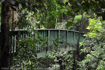 Serenity Bridge - Buderim Forest Park, Monday 8 March 2010 - handheld photos.