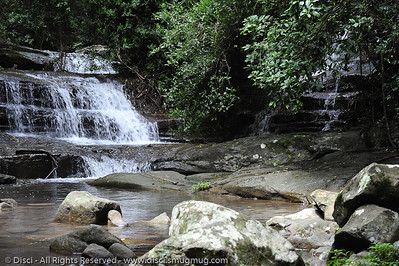 Martins Creek - Buderim Forest Park, Monday 8 March 2010 - handheld photos.