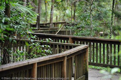 """Hand-held photos from Buderim Forest Park, with """"Serenity Falls"""". Photos by Des Thureson."""