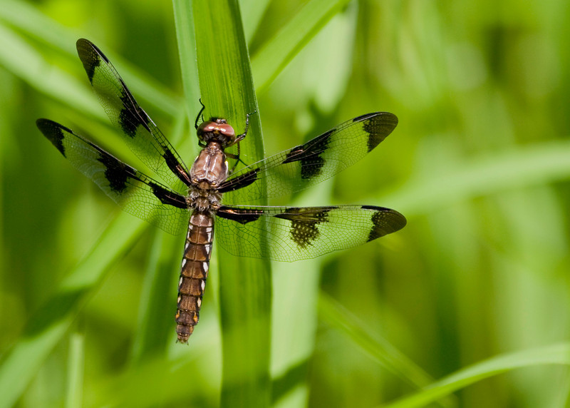 Yet Another Dragonfly, specifically serial number 34211567-98