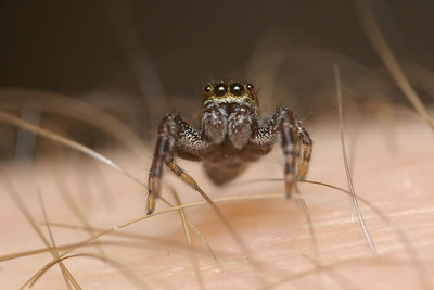 Its a jungle for this Crab Spider.